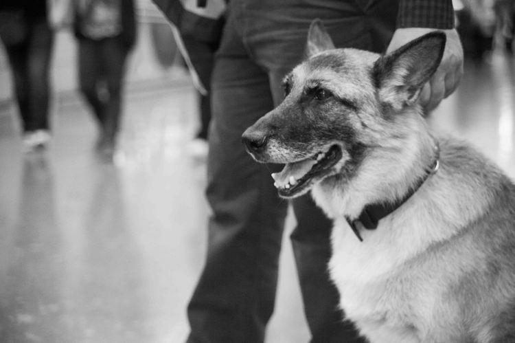 19. Luna, perro guía protagonista del cortometraje Idiotas